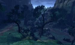 Jungle Valley