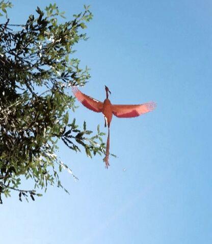 File:Lantern bird-SWB.jpg