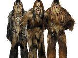 Wookiee/Legendy