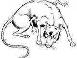 Eriaduan rat