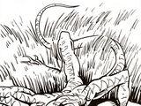 Stalker lizard