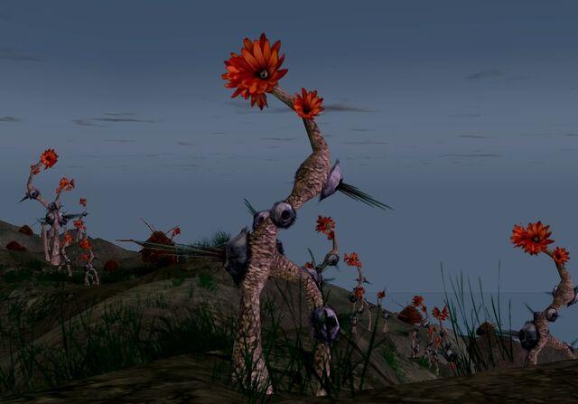File:Raventhorn plant.jpg
