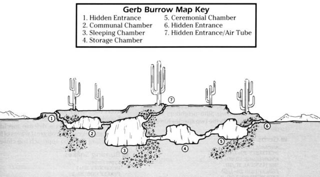 File:Gerb burrow.jpg