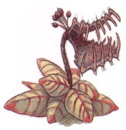 Tooke-trap plant