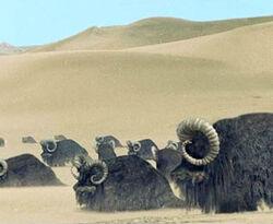 Bantha Dune Sea