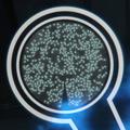Nano-droids.png