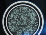 Nano-droid/Legends