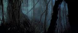 Gnarltree grove
