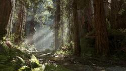 Endor Forest BF