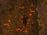 Fire lichen