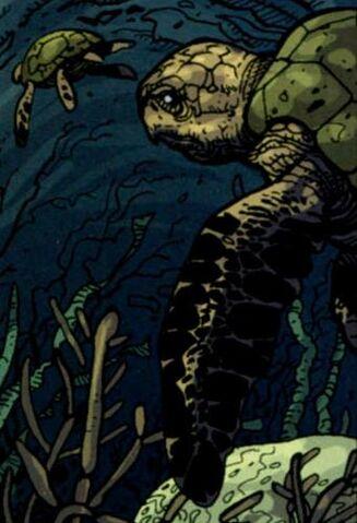 File:Inv07-Turtles.jpg