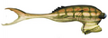 See scalefish-SWVE.png