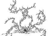 Carnivorous seaweed
