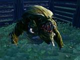 Wraith (vine cat)