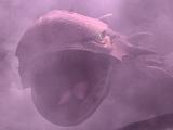 Unidentified Zillo Beast