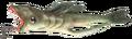 Twinfin hyacander.png
