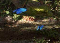 Endorian butterflies