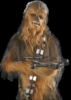 Chewie SWSB