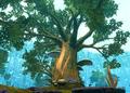 Aphor tree.png