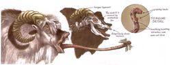 Bantha tongue