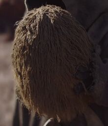 Mudhorn Egg The Mandalorian