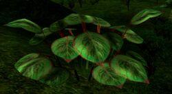 Lesset plant