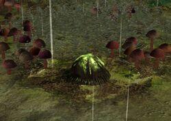 Felucian spike plant