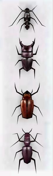 Beetlecollection