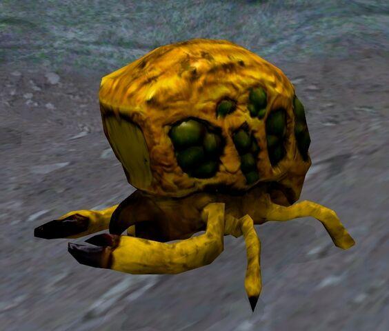 File:Uwari beetle.jpg