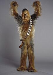 Chewie01234