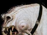 Corellian hound