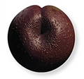Plum-SWVE.png