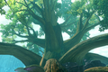 Zedalus Tree.png