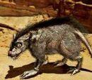 Ratto womp