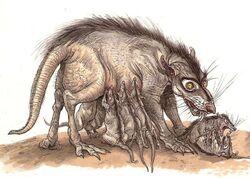 Womp Rat