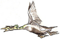 Quadduck-WOSWFG.png
