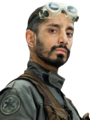 Bodhi Rook Fathead.png