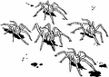 Cyborg spiders.png