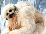 Wampa/Legends