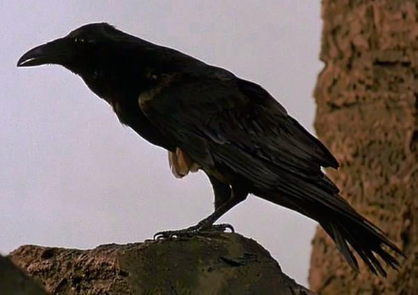 File:Raven-BFE.png