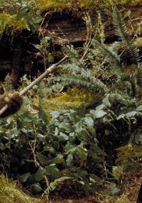 Endor plants