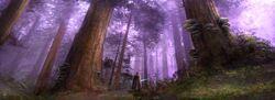 Tython forest