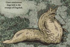 Swamp slug-SWGA