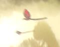 Felucia bird.png