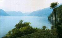 Lake country palmtree