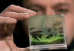 Pocket-sized aquarium