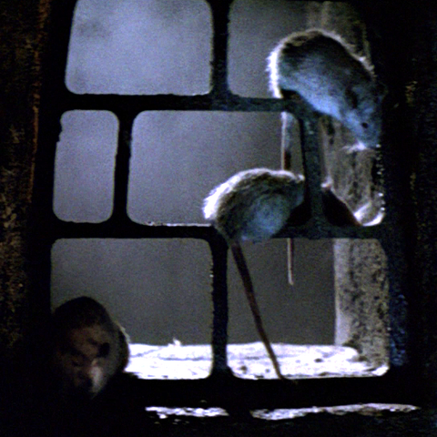 File:Movie rats.png