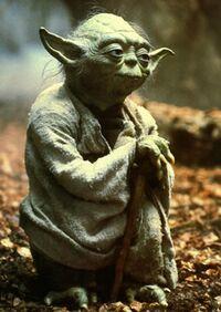 Yoda Minch