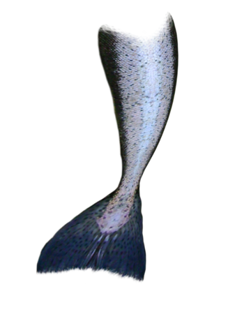 File:Mermaid tail.png