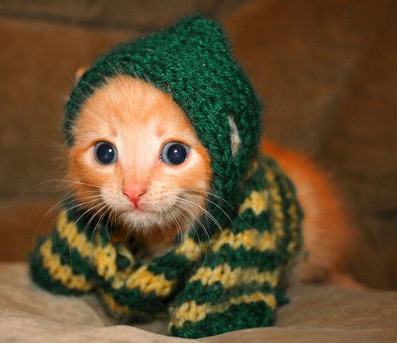 File:Cute-kitten-cats-6987468-670-578.jpg